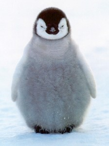contrapositive penguin